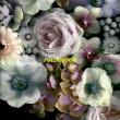 Alpines - Full Bloom